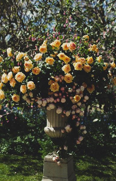 Byron Bay Wedding Flowers